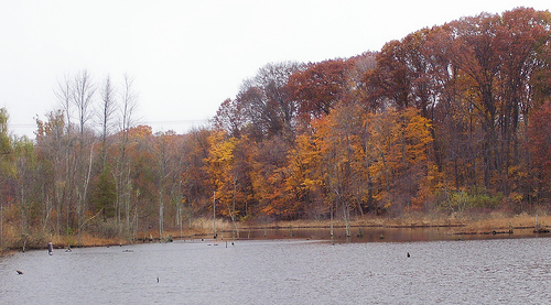 Foliage at Lake Isaac