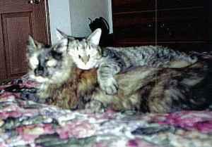 Cat Buddies: Claudia (R.I.P.) and Skittles