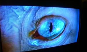 eves-eyeball