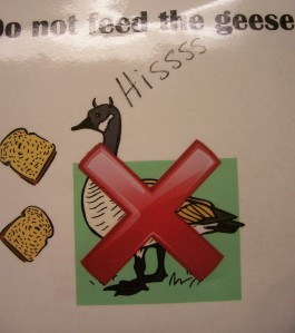 Do Not Feed the Evil, Hissy Geese