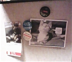 Tara's desk walls are littered  with cat photos. See?